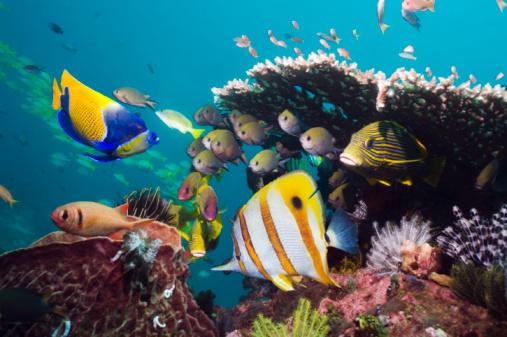 Soft Coral「Coral reef fish.」:スマホ壁紙(1)