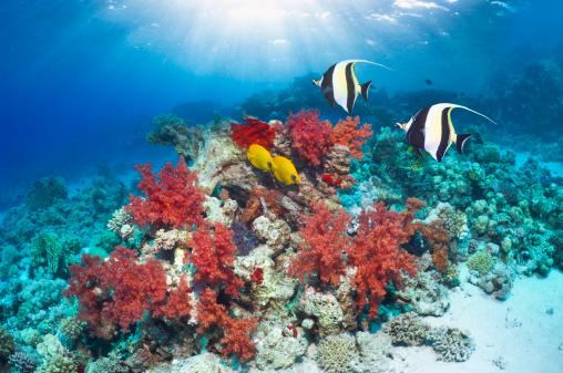 熱帯魚「Coral reef with fish」:スマホ壁紙(9)