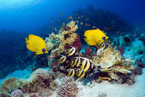 魚・熱帯魚「Coral reef with fish」:スマホ壁紙(14)