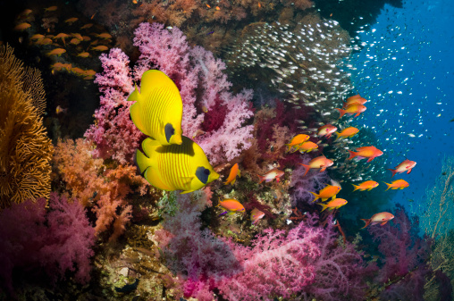Soft Coral「Coral reef with fish」:スマホ壁紙(0)