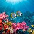 Andaman Sea壁紙の画像(壁紙.com)