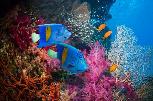 Soft Coral「Coral reef scenery」:スマホ壁紙(16)