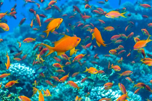Tropical fish「Coral reef scenery」:スマホ壁紙(16)
