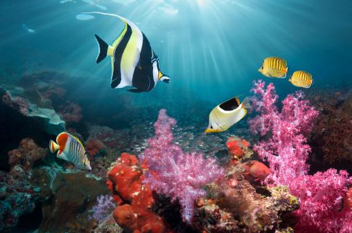 魚「Coral reef scenery」:スマホ壁紙(6)
