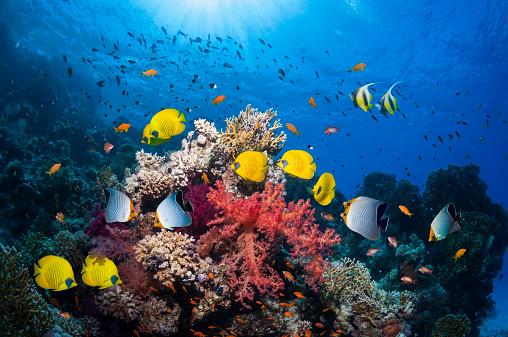 Tropical fish「Coral reef scenery」:スマホ壁紙(10)