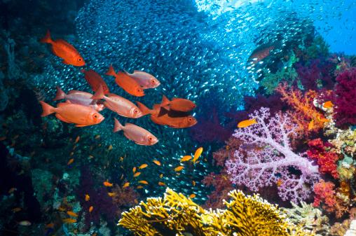サンゴ「Coral reef scenery」:スマホ壁紙(0)