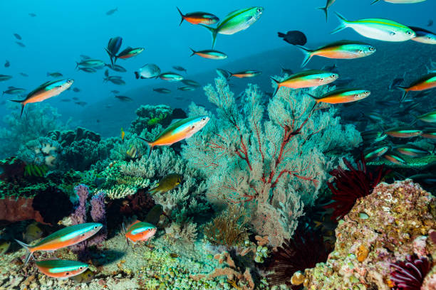 Coral Reef with Strong Current but Stunning biodiversity, Komodo Island, Indonesia:スマホ壁紙(壁紙.com)