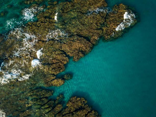 coral reef, boucan canot, reunion island, mascarene islands:スマホ壁紙(壁紙.com)