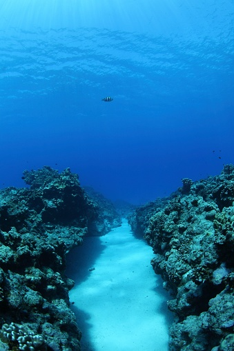Northern Mariana Islands「Coral reef, Saipan, Northern Mariana Islands」:スマホ壁紙(6)