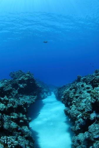 Northern Mariana Islands「Coral reef, Saipan, Northern Mariana Islands」:スマホ壁紙(19)