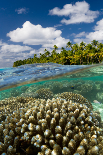 Aitutaki Lagoon「Coral reef,  Cook Islands」:スマホ壁紙(7)