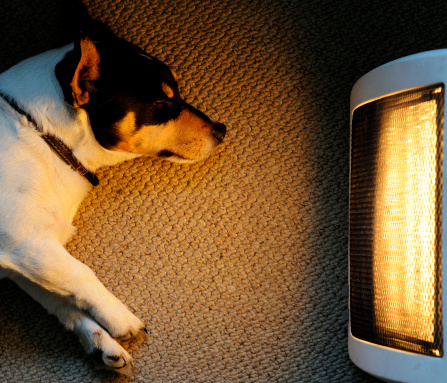 Electric Heater「A picture of a dog sitting in front of a heater」:スマホ壁紙(2)