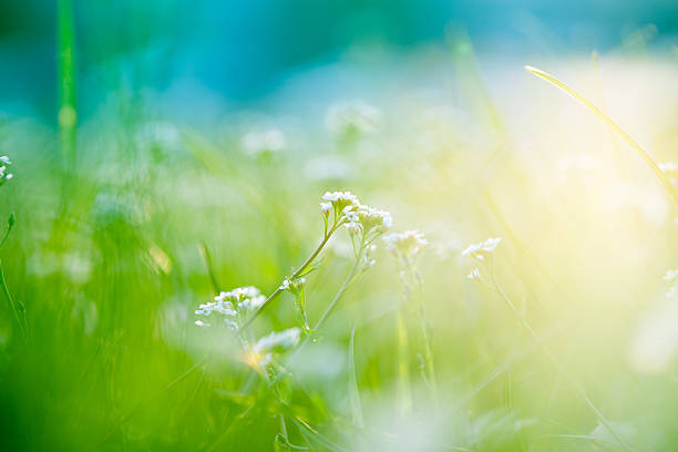 A picture of a field with sunlight:スマホ壁紙(壁紙.com)