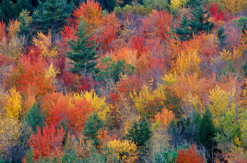 Grove「Picture of Autumn foliage with beautiful colors」:スマホ壁紙(9)