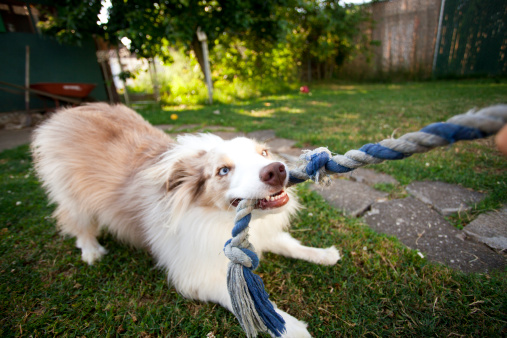 Making A Face「Picture of a puppy tugging on a rope」:スマホ壁紙(5)