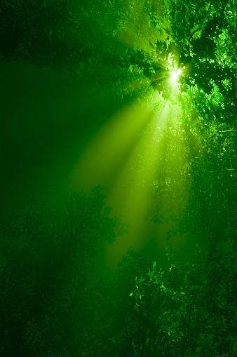 Sunbeam「A picture of green sunbeams in the forest」:スマホ壁紙(15)