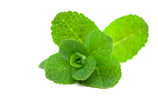 Uncultivated「A picture of a green leaf mint」:スマホ壁紙(2)