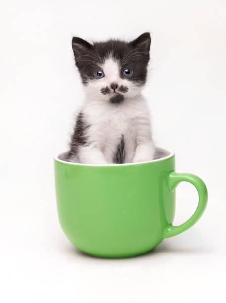 Kitten in a cup:スマホ壁紙(壁紙.com)
