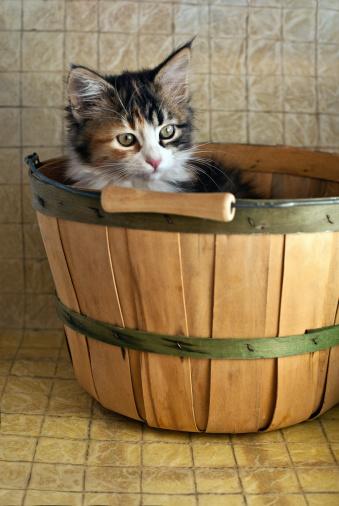 Kitten「Kitten in a basket」:スマホ壁紙(15)