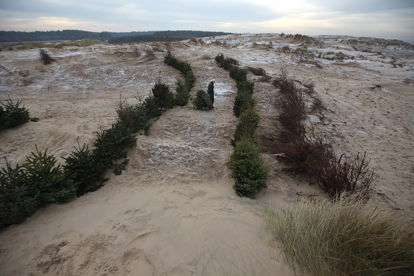 Recycling「Environmentalists Use Christmas Trees To Stabilise Sand Dunes」:写真・画像(14)[壁紙.com]