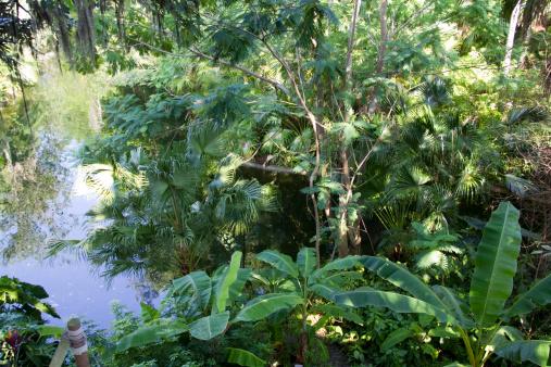 Amazon Rainforest「Elevated view of amazon rainforest」:スマホ壁紙(1)