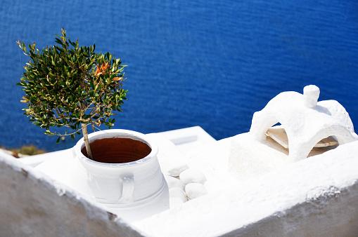 サントリーニ島「Elevated view of an olive tree in a plant pot, Santorini, Greece」:スマホ壁紙(16)