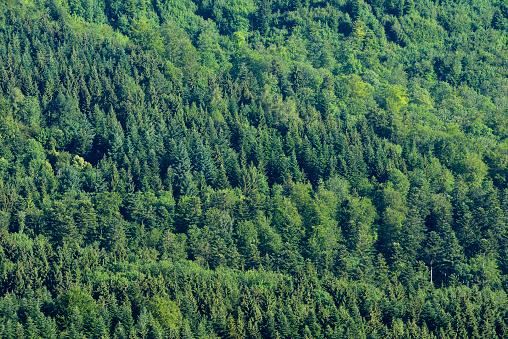 Germany「Elevated view of forest. Swabian Jura, Swabian Alb, Baden-Württemberg, Germany.」:スマホ壁紙(17)
