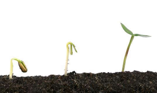 Planting「Sprouting Plant」:スマホ壁紙(18)