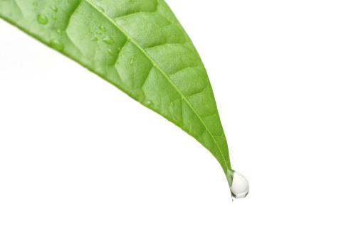 Drop「Dew」:スマホ壁紙(18)
