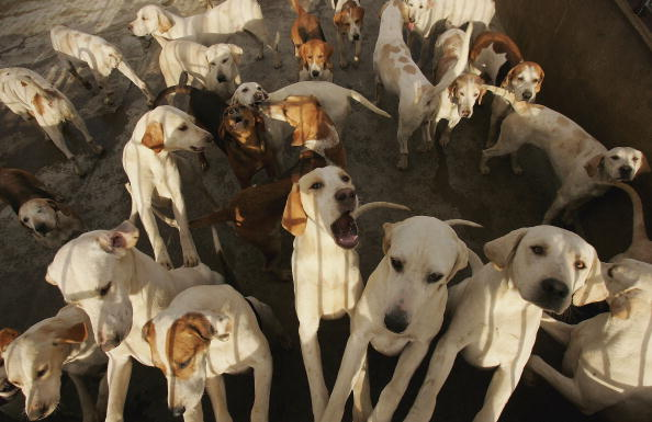 Plant Bark「First Anniversary Of Hunting With Dogs Ban」:写真・画像(19)[壁紙.com]