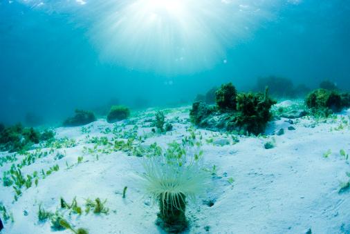 里山「Sea Floor」:スマホ壁紙(11)