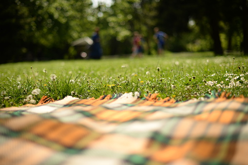 Picnic「Picnic blanket on grass in park」:スマホ壁紙(2)