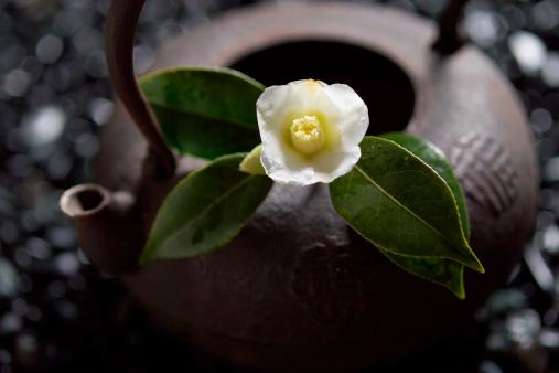 Wabi Sabi「Camellia on tea pot, close-up」:スマホ壁紙(13)