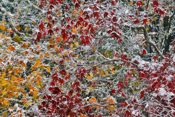 Autumns fresh snow:スマホ壁紙(壁紙.com)