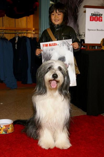 ワールド・オブ・ディズニーストア「Walt Disney Pictures Presents The Stars Of 'The Shaggy Dog'」:写真・画像(7)[壁紙.com]