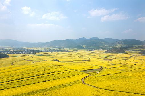 アブラナ「Rape fields in Luoping County, Yunnan Province, China」:スマホ壁紙(18)