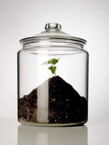 保護「Plant and dirt in glass jar」:スマホ壁紙(11)
