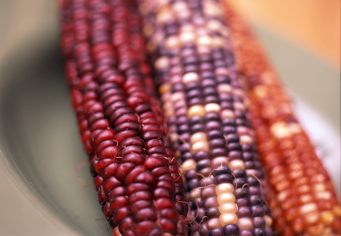 Indian Corn「Ears of Indian corn」:スマホ壁紙(8)