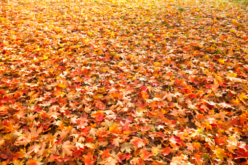 Saturated Color「Fall Leaves Background Spread Out Over Grass」:スマホ壁紙(7)