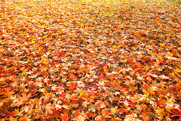 Fall Leaves Background Spread Out Over Grass:スマホ壁紙(壁紙.com)