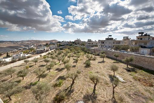 Bethlehem - West Bank「Olive trees in Bethlehem」:スマホ壁紙(3)