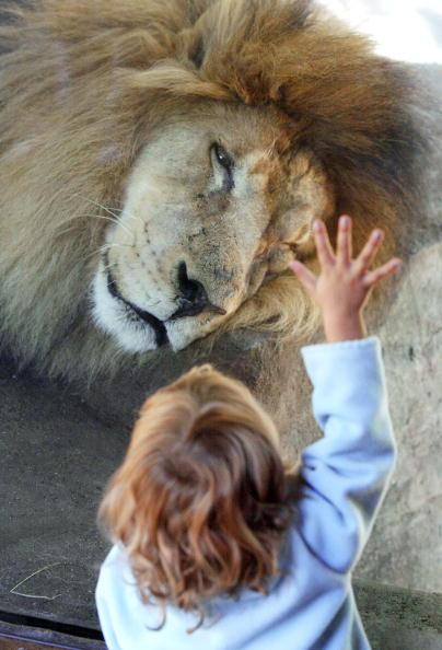 Tim Boyle「Animals At The Brookfield Zoo」:写真・画像(9)[壁紙.com]