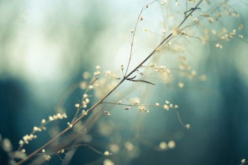 Abstract Backgrounds「Meadow」:スマホ壁紙(19)