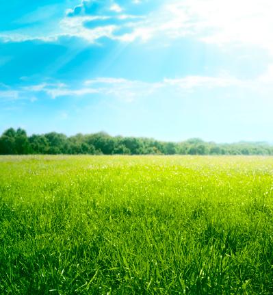 太陽の光「草地」:スマホ壁紙(14)