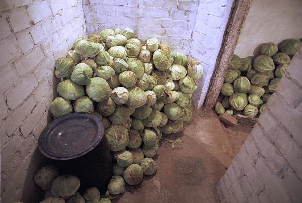 Cabbage「Cabbage Store, Kiev」:写真・画像(9)[壁紙.com]