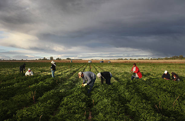 Colorado Farm Suffers As Immigrant Workforce Diminishes:ニュース(壁紙.com)