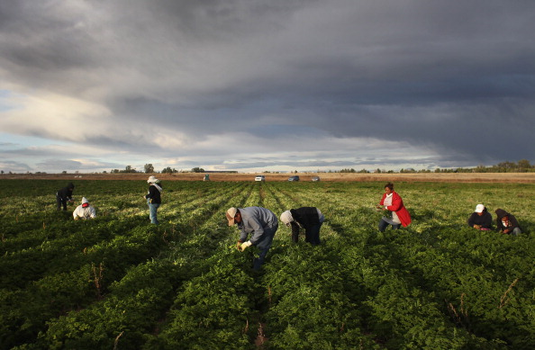 Occupation「Colorado Farm Suffers As Immigrant Workforce Diminishes」:写真・画像(16)[壁紙.com]
