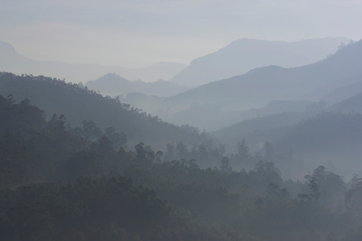 Fog「India, Kerala, Western Ghats Mts., tea plantations, dusk」:スマホ壁紙(10)