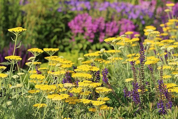 Herb and flower garden:スマホ壁紙(壁紙.com)