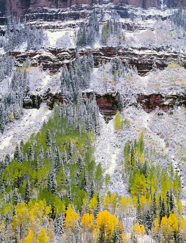 アンコンパグレ国有林「Aspen trees and conifers in snow on slopes of Ballard Mountain, Uncompahgre National Forest, Colorado, USA」:スマホ壁紙(5)